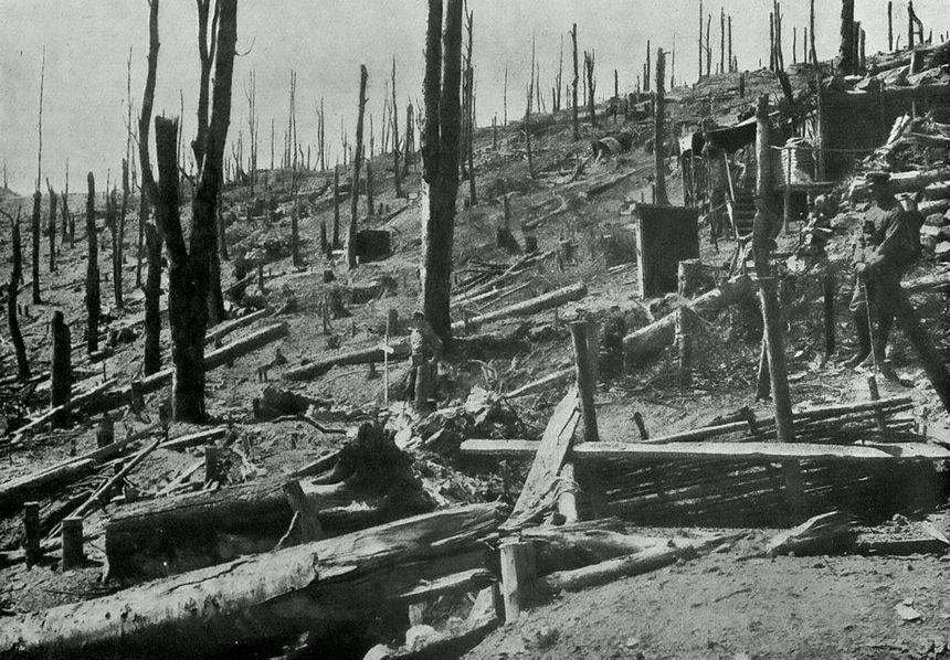 Les pentes du Hartmannswillerkopf pelées par les combats.