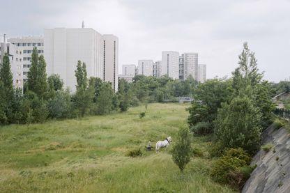 Cyrille Weiner Série « La Fabrique du Pré », 2004-2014 Le cheval de trait de Roger des Près sur le Grand Axe, Nanterre, 2008