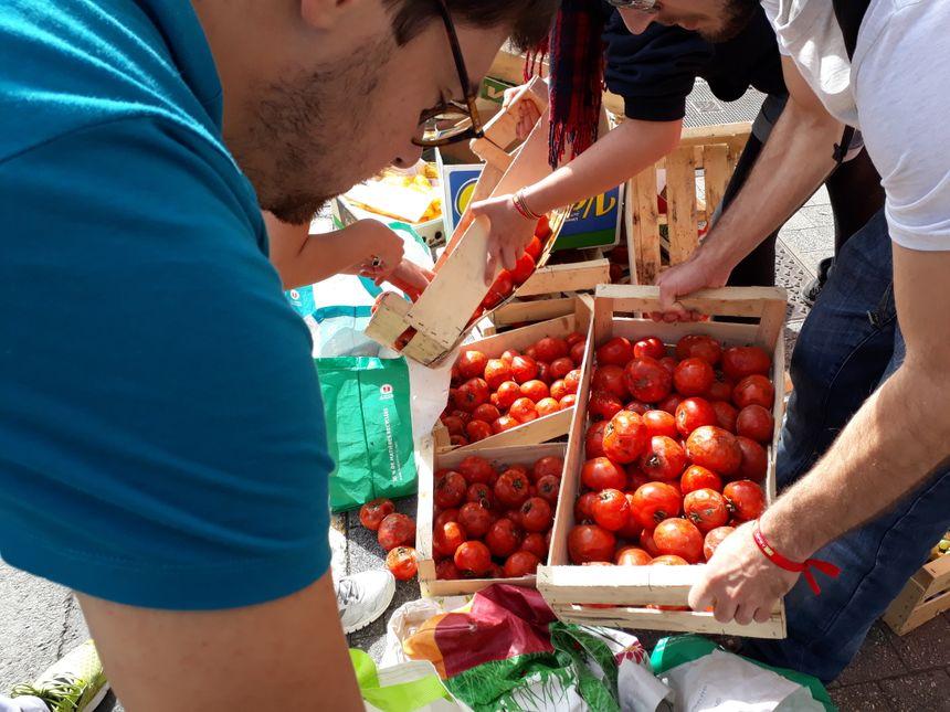 Des tomates encore mangeables