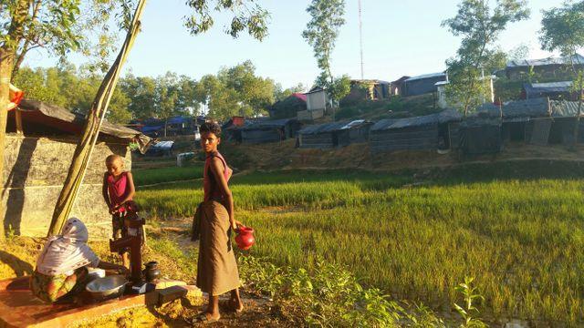 La camp de Kutupalong s'étend de plus en plus. Les nouveaux arrivant s'installent près des rizières.