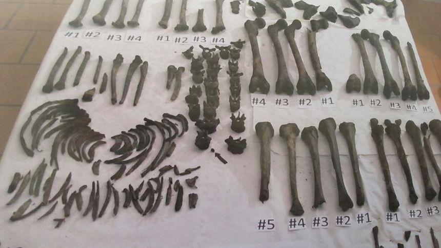 Les ossements retrouvés dans le caveau de Castelmaurou. Cinq ADN ont pu être établis.