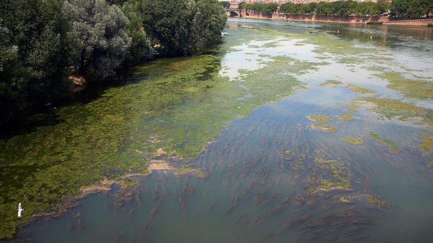 La Garonne fait partie des cours d'eau pollués en France