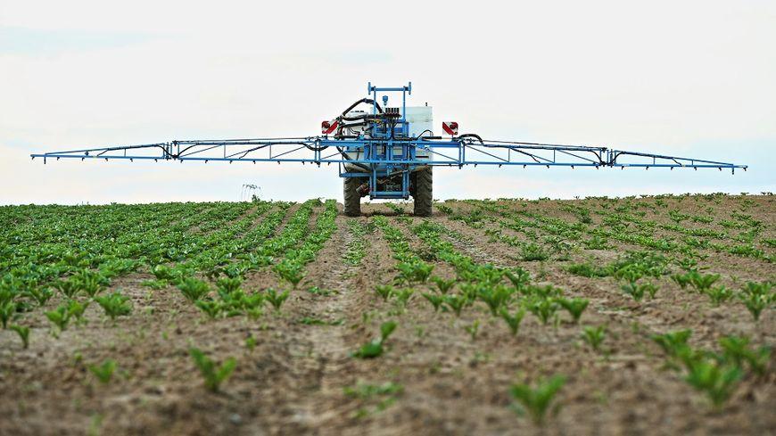 L'Anses estime que l'herbicide Basta F1 de Bayer pourrait présenter des risques pour la santé humaine.