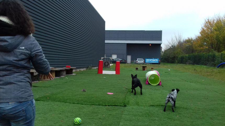 Jusqu'à 20 chiens par jour peuvent être accueillis dans le centre aéré situé dans le quartier Neuvillette à Reims.