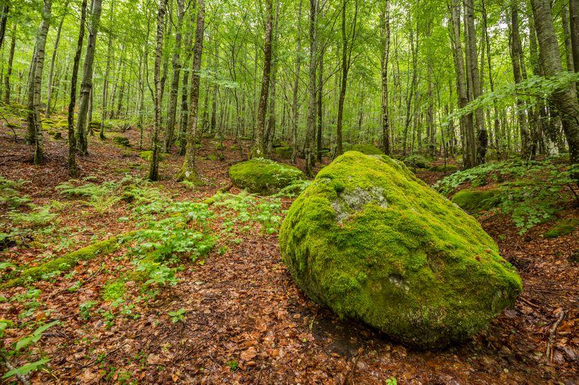 Parc national des Cévennes, classé Réserve Biosphère par l'Unesco (hameau de Champlong de Lozère).