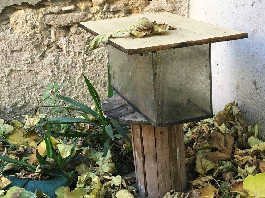 Les Clausilies romaines attendent de rentrer chez elles dans des aquariums à Mèze - Radio France