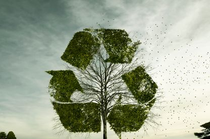 Arbuste en forme de symbole de recyclage