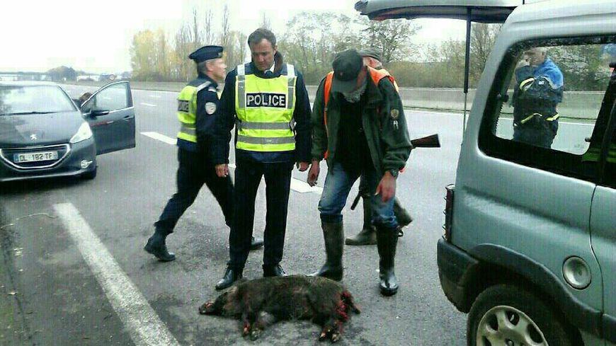 La Police et la Préfecture ont assisté les lieutenants de louveterie pour abattre les sangliers sur l'A31