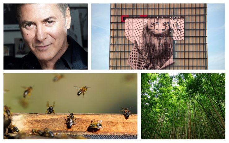 Etienne Daho · Façade de la BNF avec une oeuvre de JR · Abeilles · Forêts de bambous