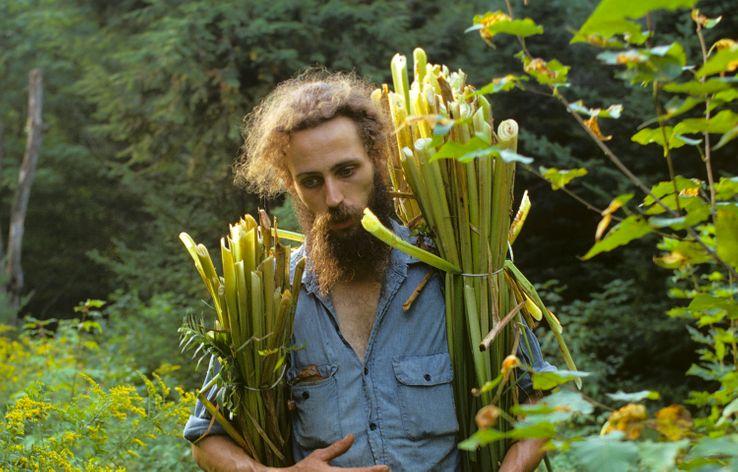 Un artisan ramasse des roseaux de quenouilles qui serviront à tisser des sièges pour des chaises, dans une communauté d'artisanat hippie en Nouvelle-Angleterre, 1973
