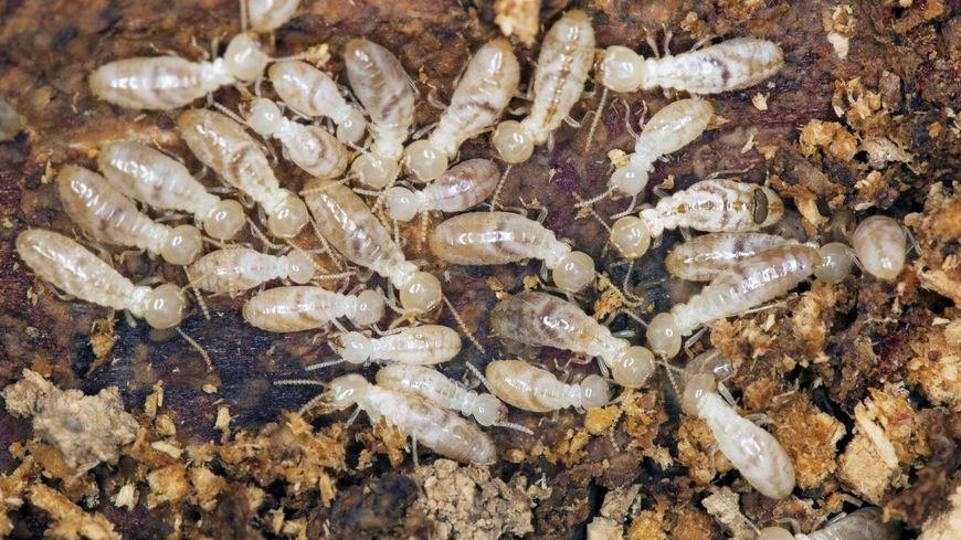 B And B Termites La Rochelle : opé...