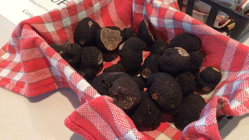 Au total, près de 62 kilos de truffes ont été vendus lors du premier marché de Saint-Alvère