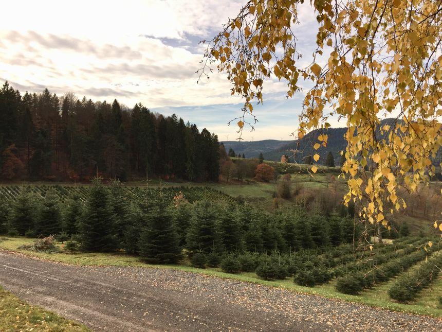Christian Loew possède un domaine de sept hectares à Bourg-Bruche
