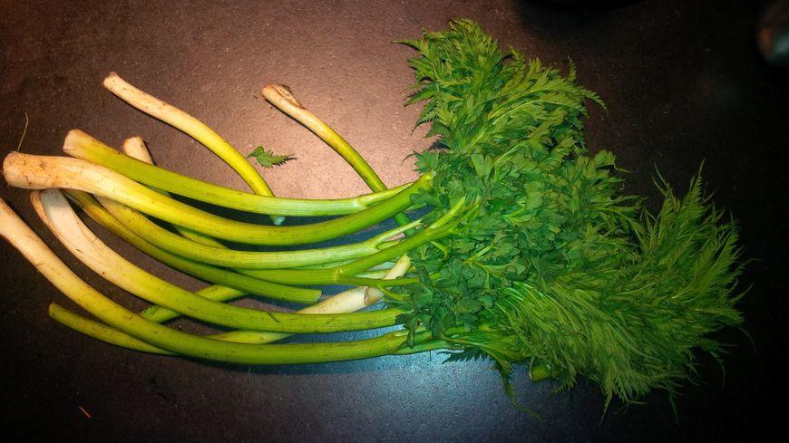 Le coscoll, plante bien connue des promeneurs catalans, pourrait bien finir dans nos cabas l'an prochain