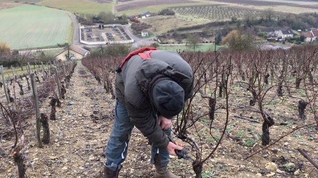 Christian Morin doit tailler 60 000 pieds de vigne avant le printemps.