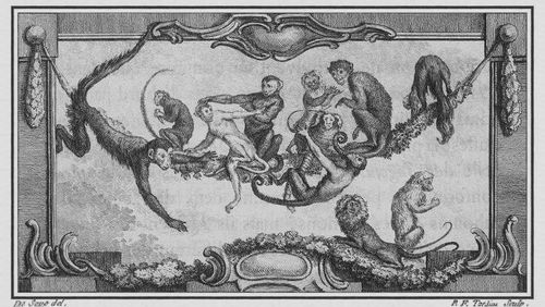 Épisode 6 : Le coût de la bipédie