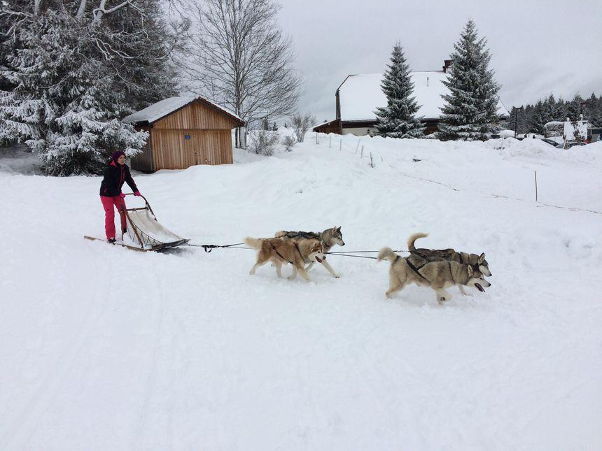 """Dans le Haut-Doubs, à Rochejean, le """"musher"""" Fabrice Talvat propose des randonnées dans la poudreuse tout l'hiver."""