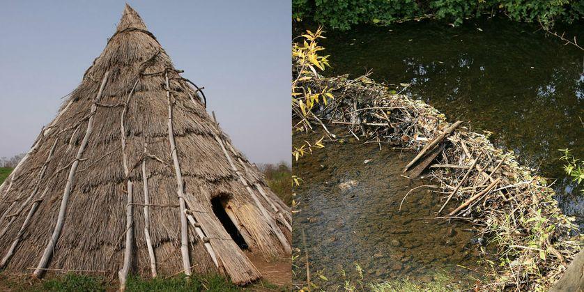 Reconstitution d'une hutte préhistorique / Barrage de castors