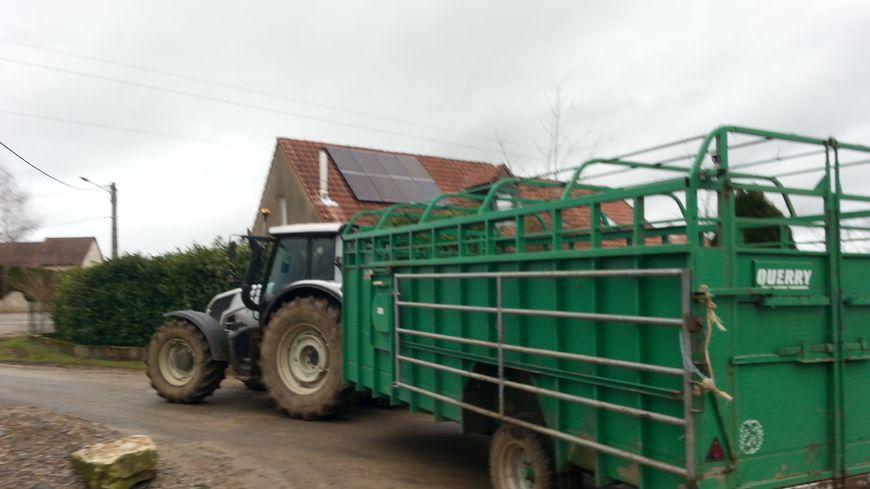 Des vaches ont été conduites ce jeudi midi à l'abattoir de Besançon