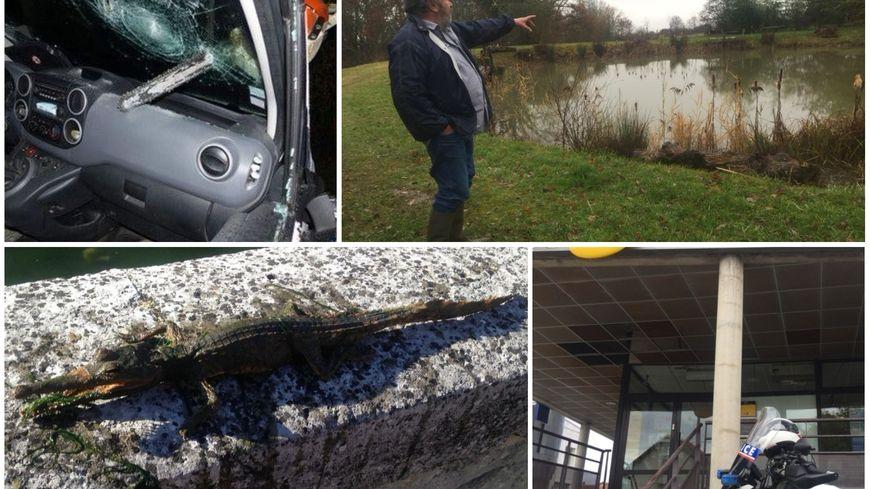 Une tronçonneuse dans le pare-brise, des grenouilles, un crocodile et un courageux client de la Poste ont fait l'actu de 2017 en Dordogne.