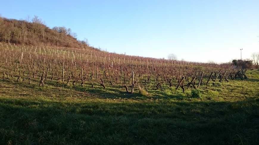 Talant se met à la production de crémant de Bourgogne.
