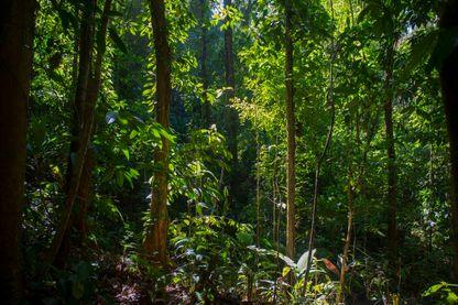 Forêt équatoriale