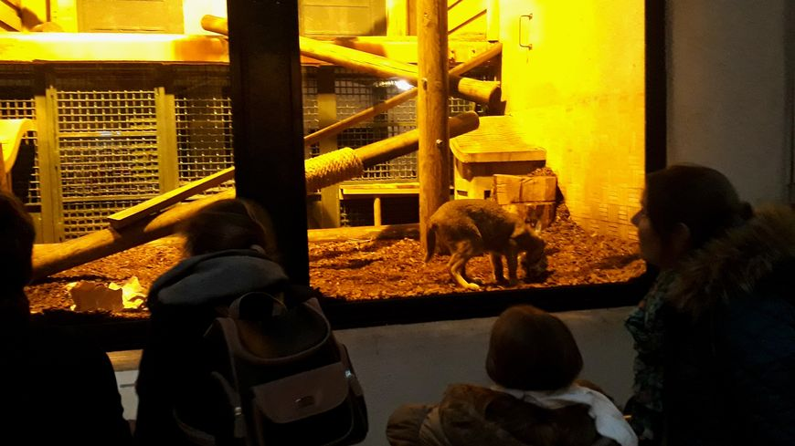 Mercredi, les visiteurs ont admiré le noël des caracals à la ménagerie du Jardin des Plantes