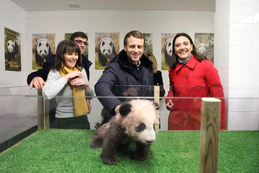 Emmanuel Macron cède lui aussi à la Panda Mania
