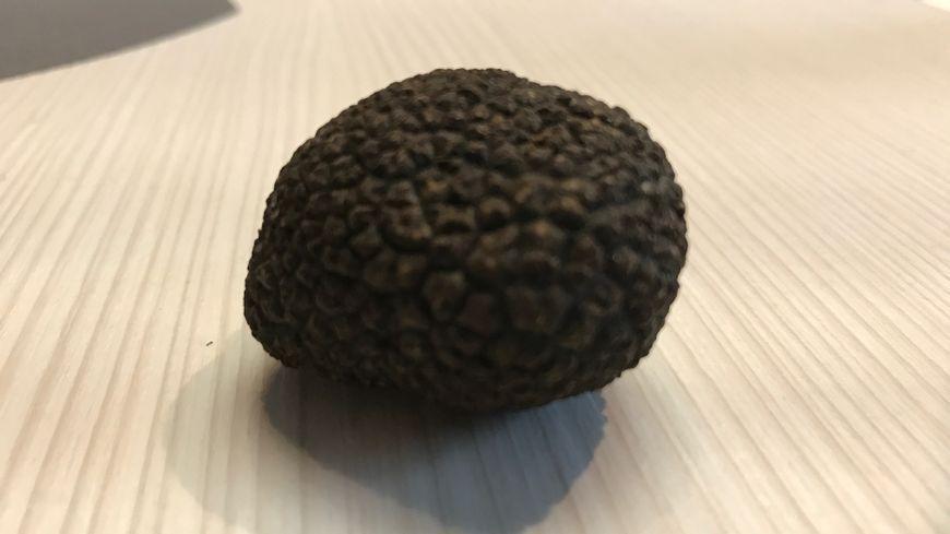 Le champignon noir a été découvert au pied d'un charme