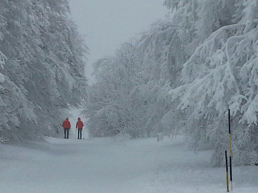 Balade route des Crêtes dans les Vosges
