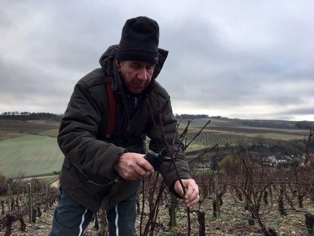 Le vigneron utilise un sécateur électrique pour éviter les tendinites.