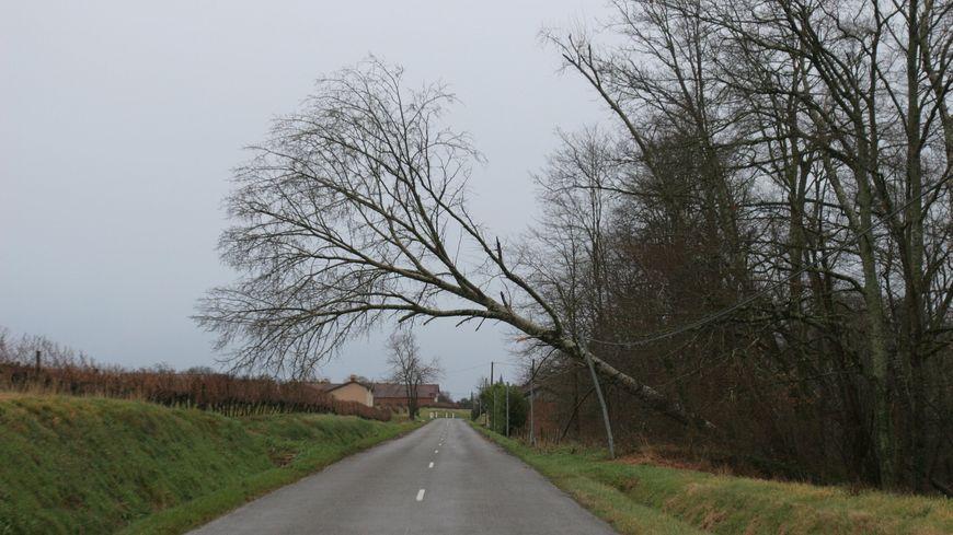 Un arbre couché par un coup de vent en Dordogne