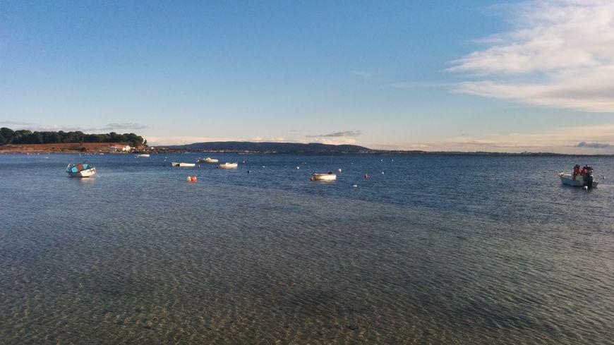 De nombreux bateaux amarrés à des corps-morts sur l'étang de Thau à Mèze.