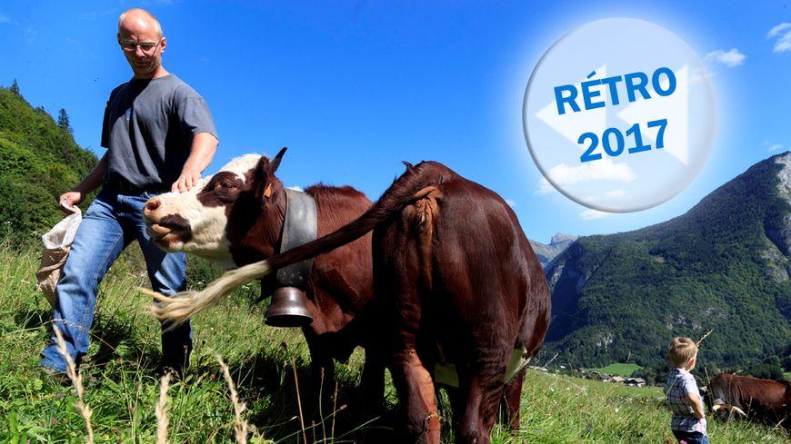 Les cloches des vaches du Biot font-elles trop de bruit ?