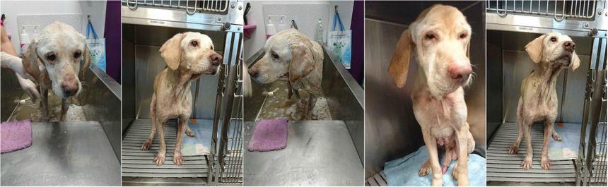 Rex et Zoé pendant leur séjour chez le vétérinaire