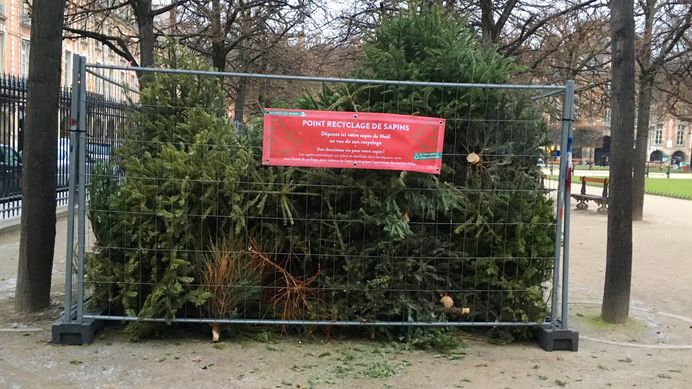 point recyclage de sapins