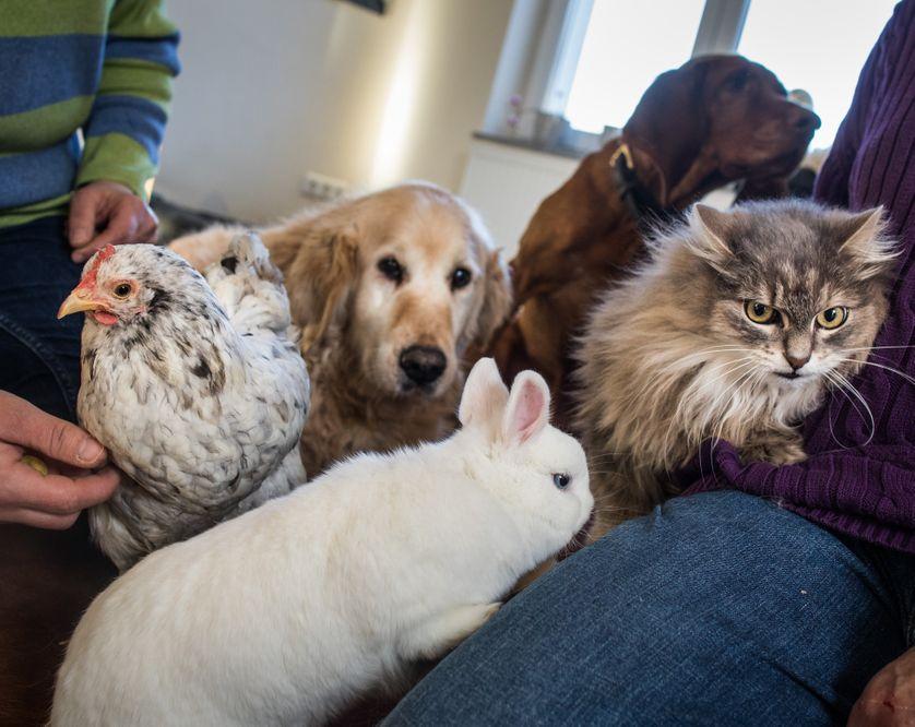 Une poule, deux chiens, un lapin et un chat réunis