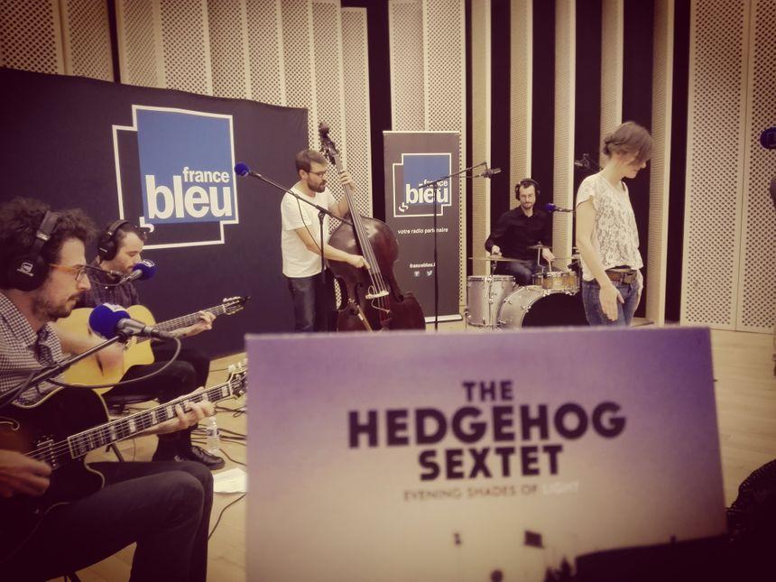 The Hedgehog Sextet