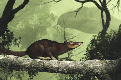 Cronopio - Cronopio dentiacutus était un des premiers mammifères a côtoyer les dinosaures il y a environ 100 millions d'annees, au Cretace. Decouvert en Argentine, il mesurait environ 15 cm de long.