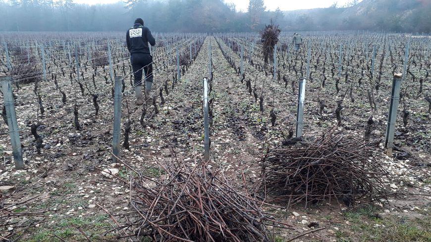 """La société Vitis Valorem collecte les sarments de vignes en Côte-d'or, pour leur donner une """"seconde vie"""""""
