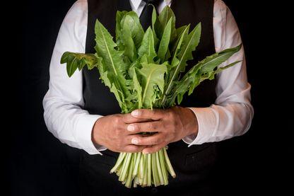 Bouquet de feuilles de pissenlit
