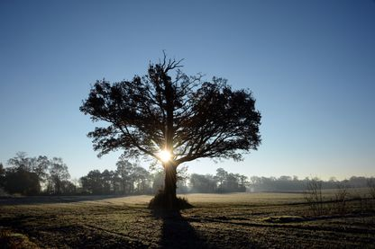 Le chêne fait partie des espèces d'arbres récompensées au concours de l'Arbre de l'année