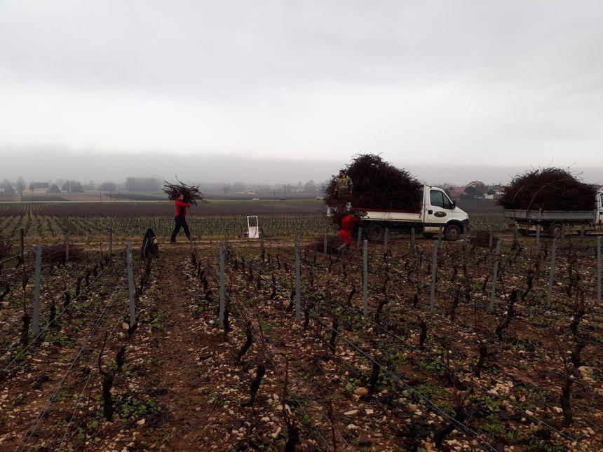 """La société récolte aujourd'hui près d""""une tonne de sarments sur une centaine de domaines viticoles"""