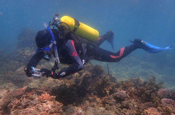 Peter Harrison en plein travail sur des récifs endommagés,  recolonisés par des larves qui ont mûri en laboratoire