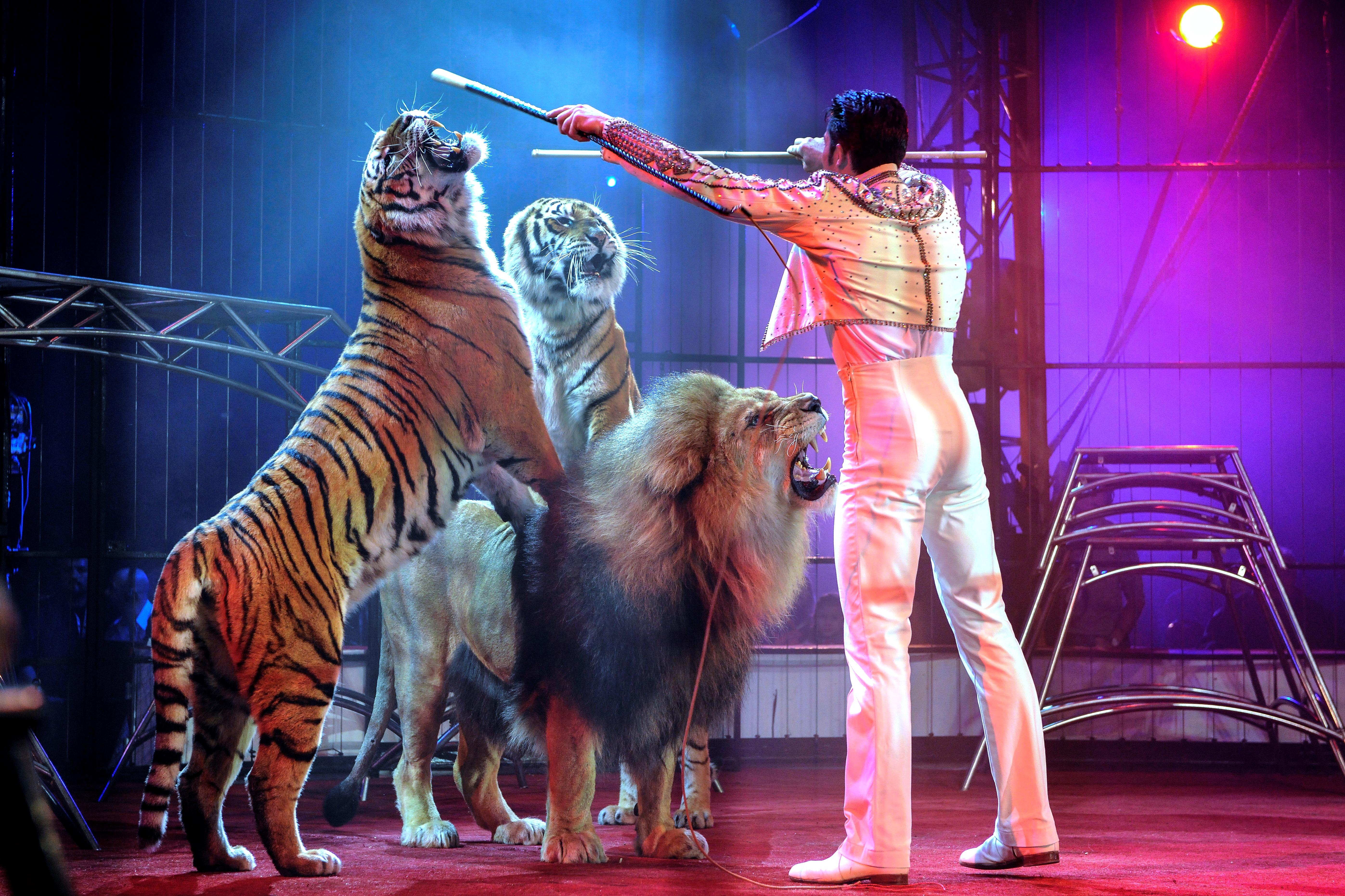 Violence Et Maltraitance Au Cirque Penetrez Dans La Cage Du