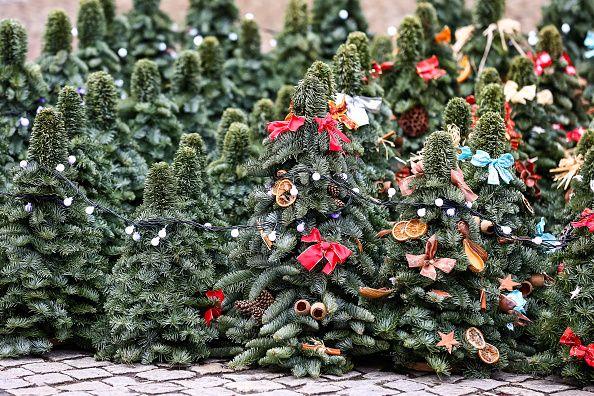 Des petits sapins de Noël sur le marché de Wroclaw.