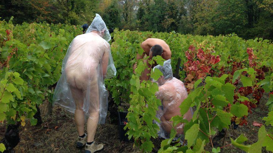 Certains vendangeurs naturistes se sont équipés de poncho en plastique pour affronter la pluie