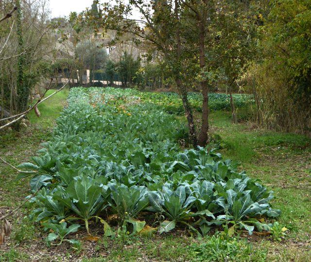 A Mouans Sartoux, le jardin communal fournit les légumes de la cantine scolaire