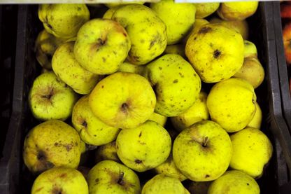 Pommes «moches»