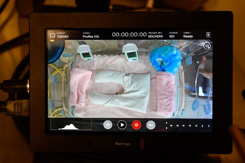 Une nurserie spéciale pour les deux futurs bébés avait été installée à Beauval